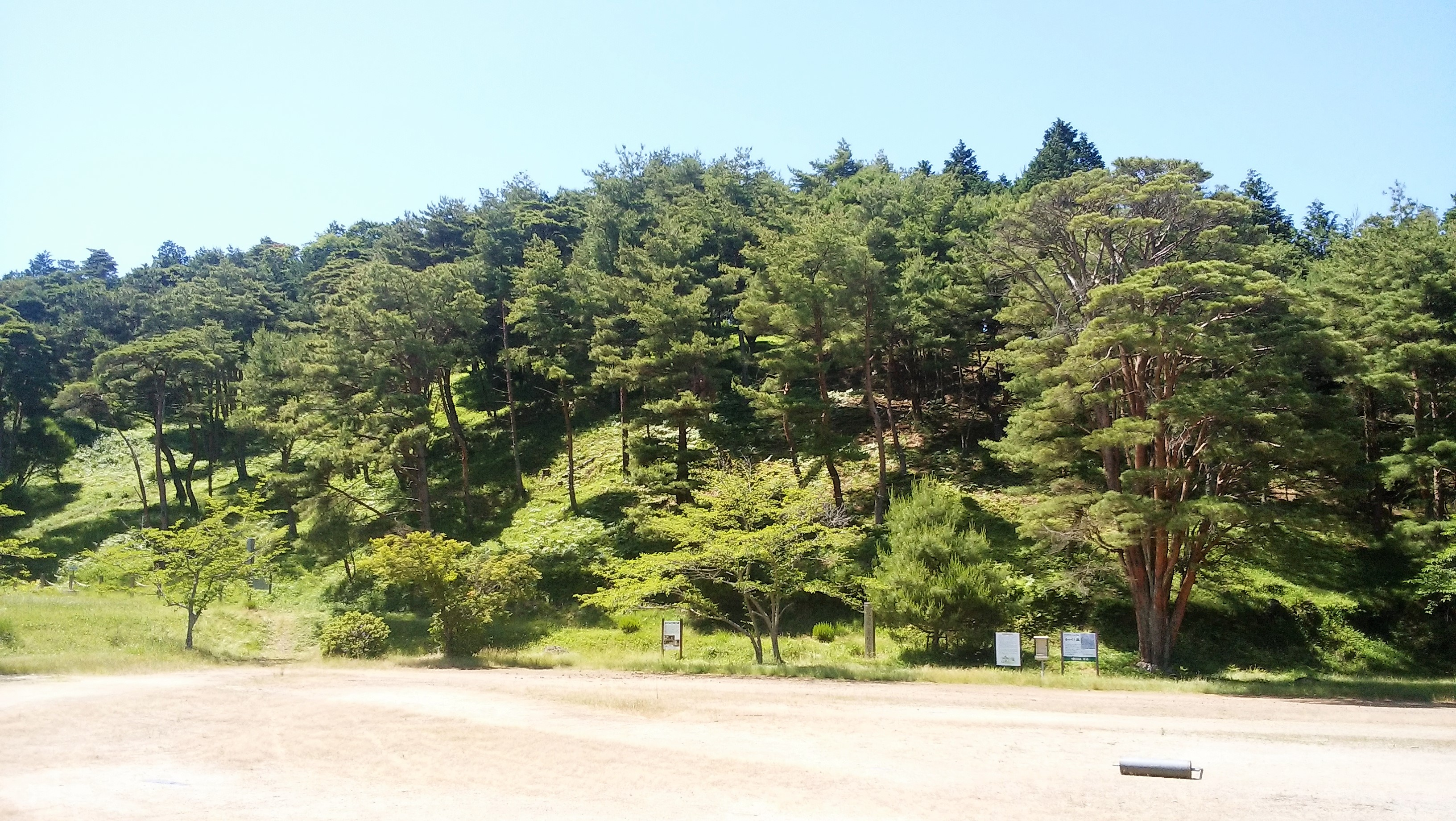 日本でここだけ!平松の「ウツクシマツ」は美しかった