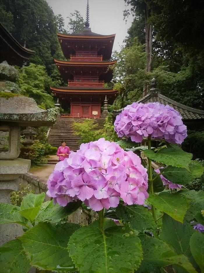 近江の西国三十三所シリーズ:第三十一番 長命寺~琵琶湖を見下ろすアジサイの寺