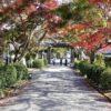 秋の紅葉ビワイチ作戦‼️(3)