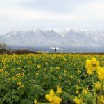 地球の歩き方滋賀特派員ブログに記事を投稿しました!(守山市・なぎさ公園)