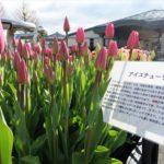 地球の歩き方滋賀特派員ブログに記事を投稿しました!(草津・水生植物公園みずの森)