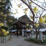 地球の歩き方滋賀特派員ブログに記事を投稿しました!(近江八幡・沙沙貴神社)