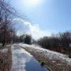 地球の歩き方滋賀特派員ブログに記事を投稿しました!(野洲・湖岸緑地中主吉川公園)